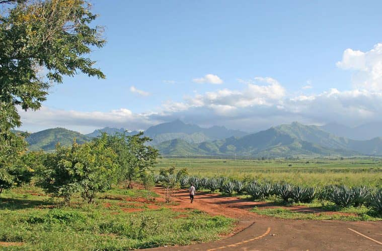 1280px-Mt_Uluguru_and_Sisal_plantations